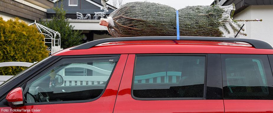 weihnachtsbaum richtig transportieren adac. Black Bedroom Furniture Sets. Home Design Ideas