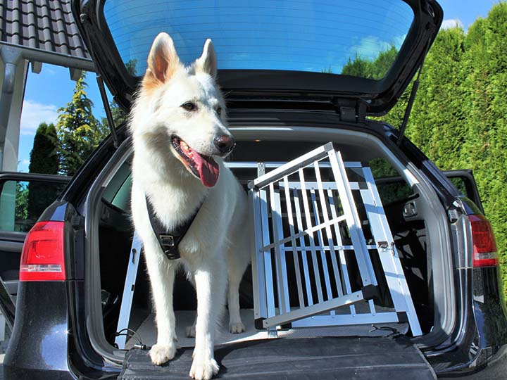 Hund Transport Sicherheit Box